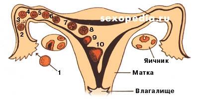 kak-lechit-esli-sperma-korichnevaya