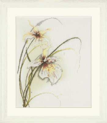 орхидеи вышивка крестом схемы - Всемирная схемотехника.