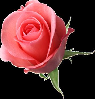 Çiçek PNG Meteryal