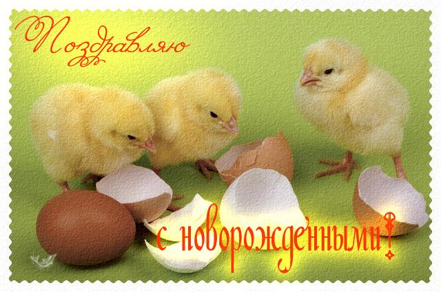 http://forum.materinstvo.ru/uploads/1260725782/post-51844-1260859847.jpg