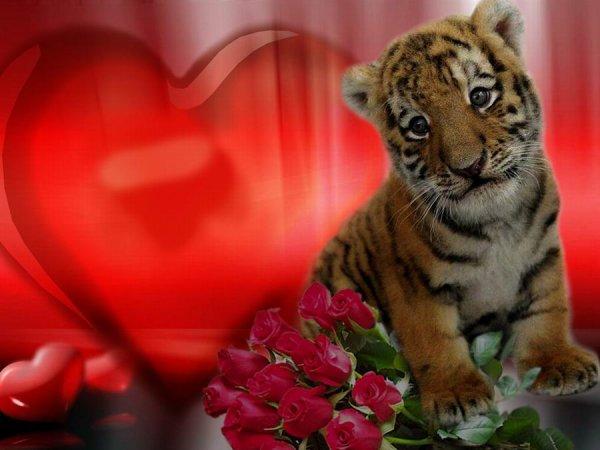 Открытка с днем рождением с тигренком