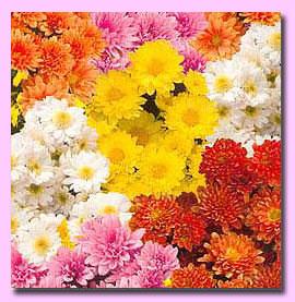 Многолетники цветущие все лето фото