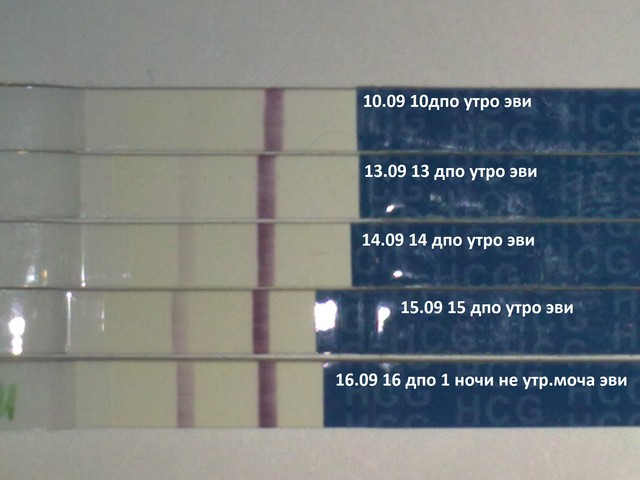 Еле видна вторая полоска на тесте на беременность форум