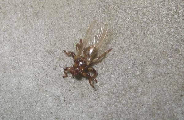 Фото Сонник жуки в голове в волосах