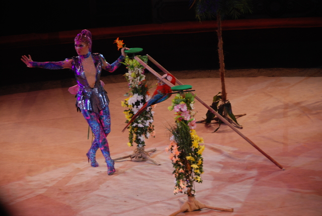 Были в цирке на Вернадке 6 января на вечернем представлении.  Понравилось.  Смотрим представление уже 3-й год подряд.