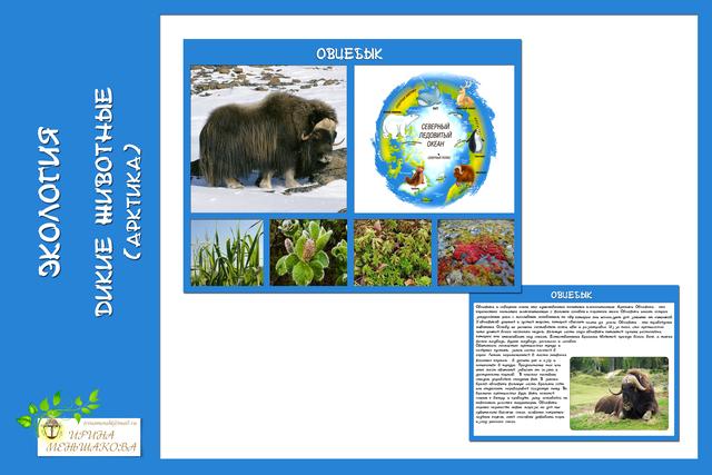 Экология. Дикие животные (Арктика)